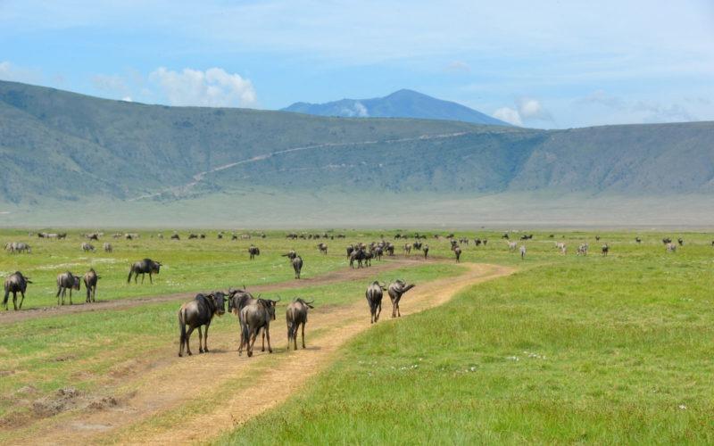 Cratère Ngorongoro Tanzanie