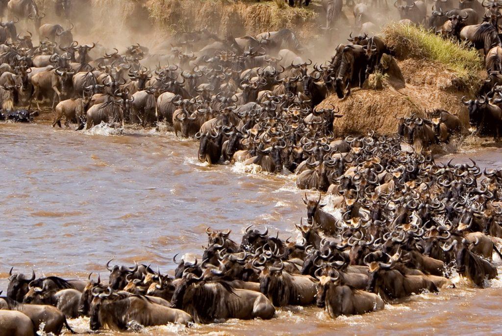 Beste reistijd tanzania tijdens grote trek tanzania